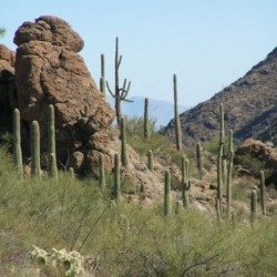 saguaro-national-monument